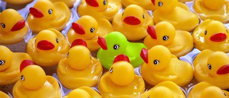 beaucoup de canards vibrants