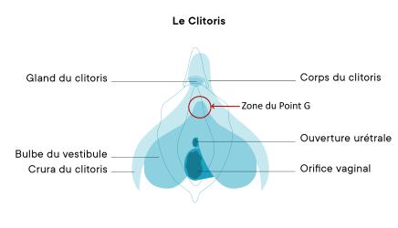 Clitoris avec point G